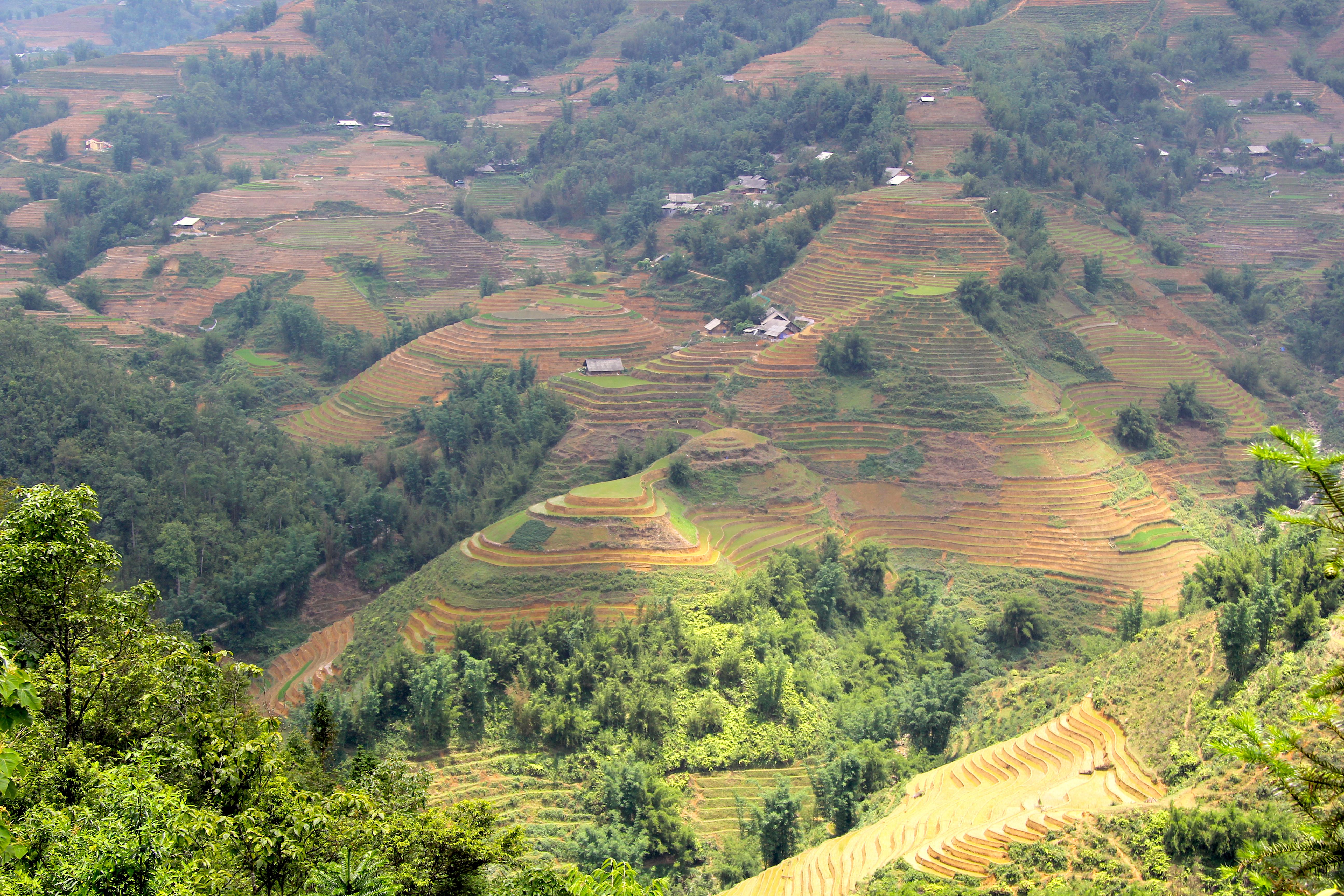 Рисовые поля в Сапе