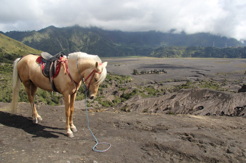 Бромо Вулкан Бромо Вулкан Бромо (Gunung Bromo) на Яве IMG 9050 1024x682